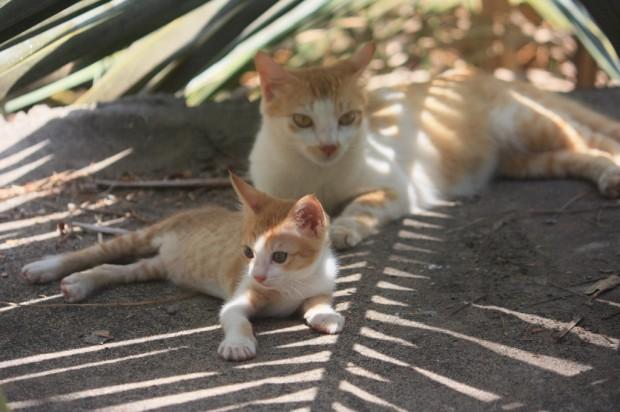 животные в Гоа