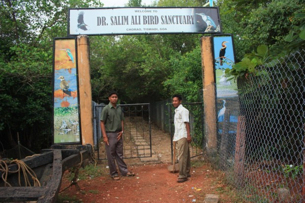 птичий заповедник Salim ali bird sanctuary, Гоа, Индия