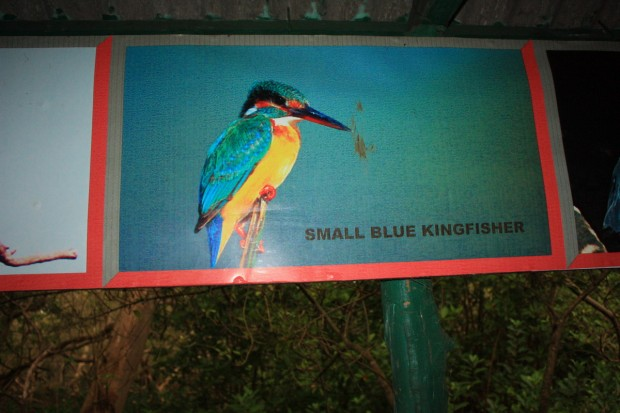 птичий заповедник Salim ali bird sanctuary
