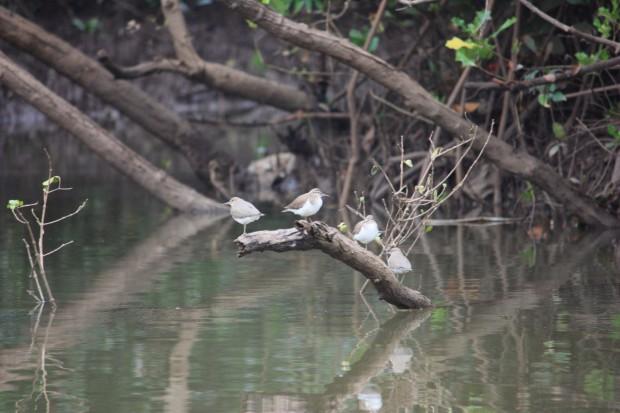 птичий заповедник Salim ali bird sanctuary