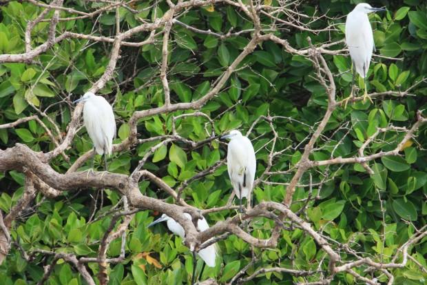 птичий заповедник Salim ali bird sanctuary цапля