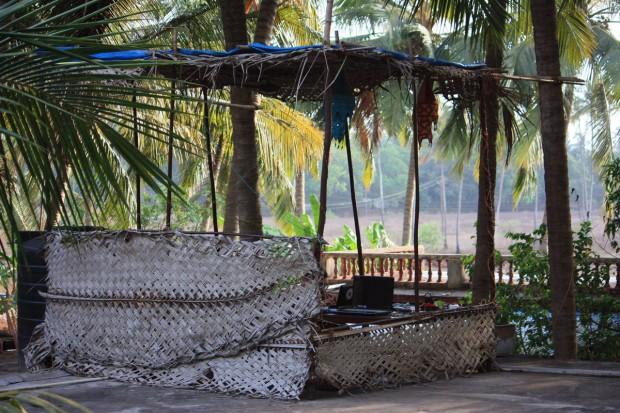Пальмовая роща в Гоа