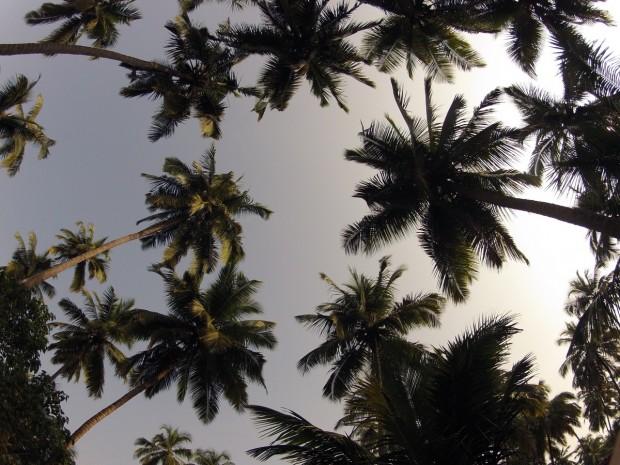 Джаз-фестиваль под пальмами в Гоа